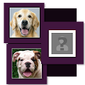 Dog Breeds Most Look Like You icon