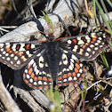 Edith's checkerspot