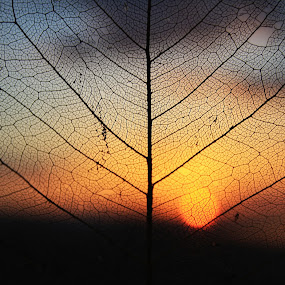 Sunset by Svetlana Micic - Nature Up Close Other plants ( old, sunset, leaf, close up, sun )