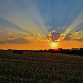 by Vukosava Radenovic - Landscapes Prairies, Meadows & Fields (  )