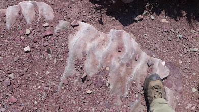 Photo: Ripple marks in argillite