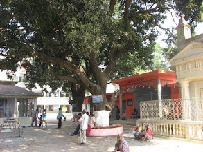 Photo: Another view of the same tree in the middle of the temple premises