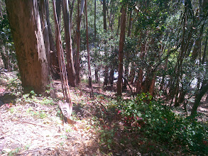 Photo: Tinder box. Very difficult and expensive to manage this kind of vegetation.