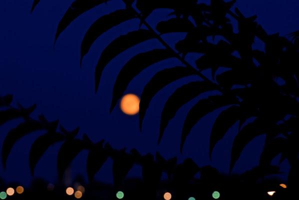 La luna tra i fruscii della notte di Inazur