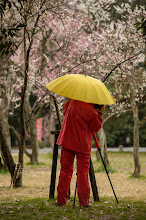 """Photo: This photo appeared in an article on my blog on Mar 18, 2013. この写真は3月18日ブログの記事に載りました。 """"The Buds and Blossoms are Just Peachy at the Kyoto Imperial Palace"""" http://regex.info/blog/2013-03-18/2227"""