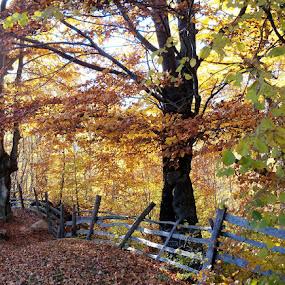 autumn by Ionela Garovat - Nature Up Close Trees & Bushes ( nature, autumn, trees,  )
