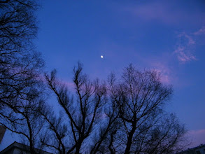 Photo: bright moon and branches in sky of QRRS Dorms.