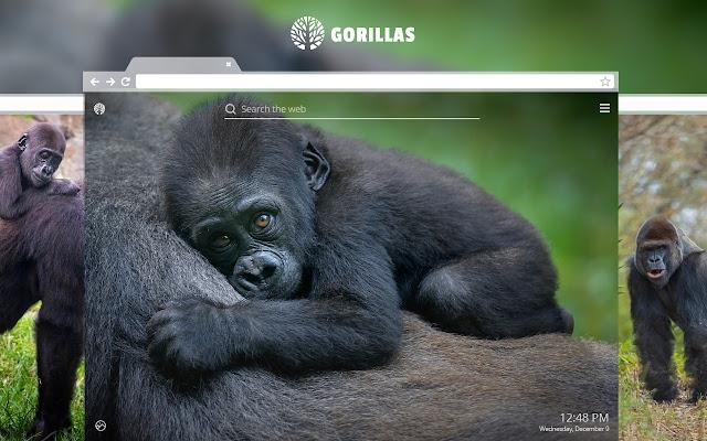 Gorilla HD Wallpaper New Tab Theme