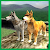 Wolf Quest: Wild Animal Life file APK Free for PC, smart TV Download