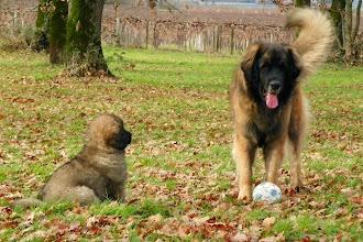 Photo: Tata, elle m'apprend à jouer au ballon