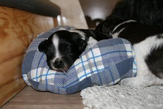 Photo: Erna hat sich das kleine Kissen gesichert