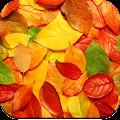 Autumn Wallpaper 4K APK