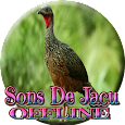 Sons do bando de Jacu apk