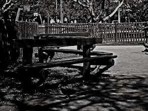 Photo: Lazy day. #tree   #parque   #ibirapuera   #park   #pb   #bw   #bwphotography   #bwstreetphotography   #blackandwhitephotography   #blackandwhite