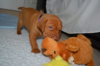 Photo: Bite her littermate the lion!