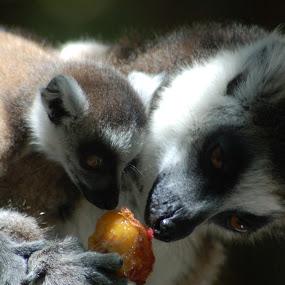 by David Degruchy-Jones - Animals Other Mammals
