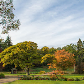 Harlow Carr by Andrew Moore - City,  Street & Park  Vistas (  )