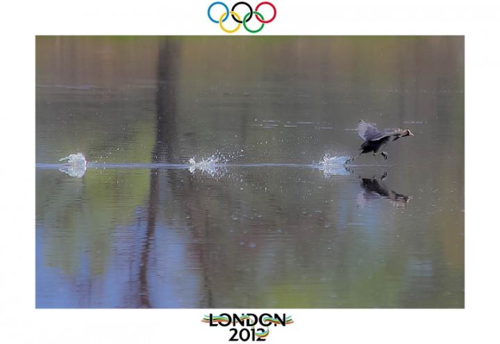 Olympic Games ... Triple Jump di Alessandro Remorini