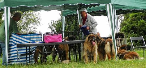 Photo: La suite du clan Hollandais, 9 chiens sous deux tivolis