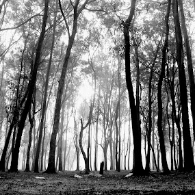 DEEP FOREST  by Abinash Patra - Landscapes Forests ( tree, nature, blak&whit, forest, landscapes )
