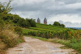 Photo: Den sidste gruppe vandrede sammen med mig tilbage gennem vinmarkerne til Abtei St. Hildegard