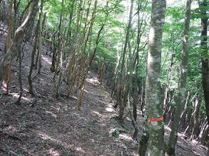 通常の登山道に合流