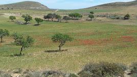 La Serrata durante la primavera, en una foto de 'Cabodegatanatural'.