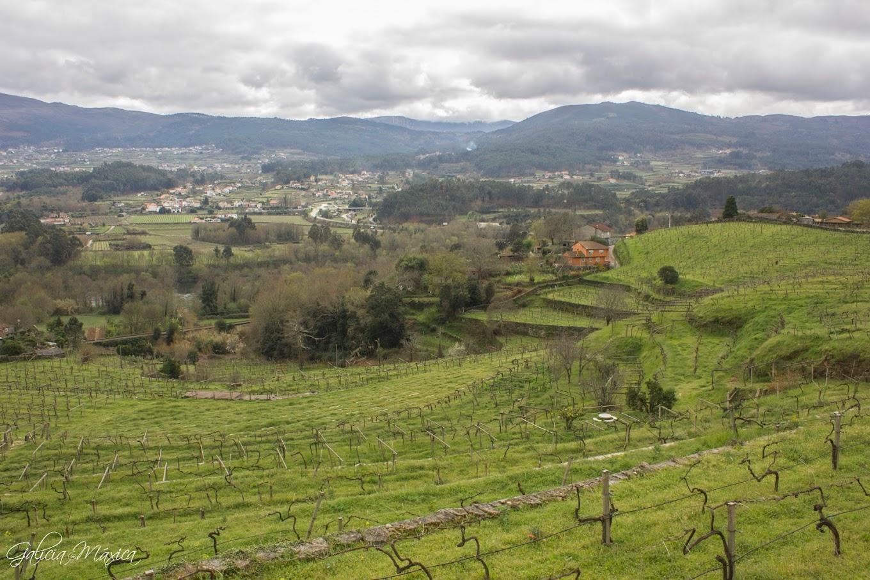Vista de Arbo