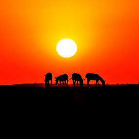 2016 first sunset @ LRK Gujrat India by Vijay Singh Chandel - Landscapes Sunsets & Sunrises ( picoftheday, sunsets, bestoftheday, sunset, 2016, india )