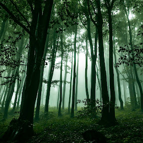magical by Kiril Kolev - Landscapes Forests ( magical, trees, forest, beauty in nature, light, #GARYFONGDRAMATICLIGHT, #WTFBOBDAVIS )