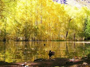 Photo: June Lake