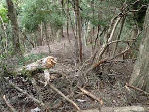 倒木を避けて進む