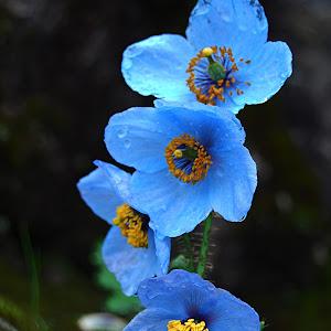 Flowers (27).jpg