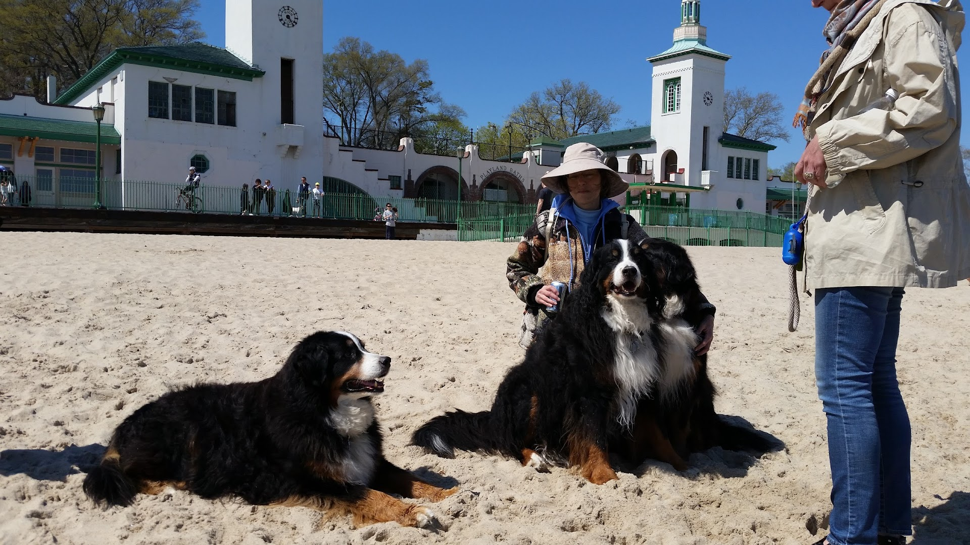 Bernese Mountain Dogs of Greater New York - BMDGNY