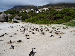 Photo: Another penguin rookery