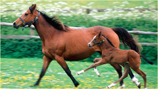 免費下載娛樂APP|HD馬の画像 app開箱文|APP開箱王