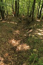 """Photo: A patak felől felfelé haladva a következő formációk tárulnak fel a kutatóárokban: """"steinalmi mészkő"""", """"bódvalenkei mészkő"""", """"hallstatti mészkő"""""""