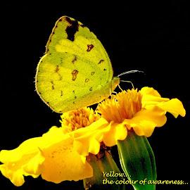 Yellow.. by Asif Bora - Typography Quotes & Sentences (  )