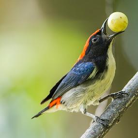 Enjoying delicious fruit by Eric Wang - Animals Birds