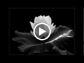 Video: Antonio Vivaldi  La costanza trionfante (RV 706-A) - Aria [soprano]  Amoroso caro sposo -