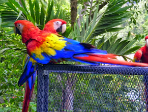 Photo: Parrots at Hotel Atitlan on Lake Atitlan.