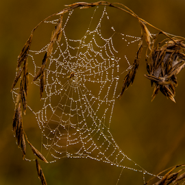 by Irena Gedgaudiene - Nature Up Close Webs (  )