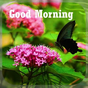 Dobré ráno denně pozdravy - náhled