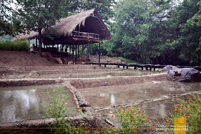 Ella Jungle Resort Sri Lanka Lounge