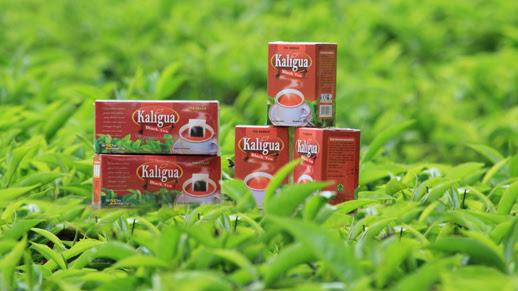 Teh Kaligua Black Tea Oleh-oleh Khas Brebes