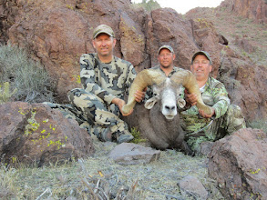 """Photo: L to R, Jay Scott, Darr Colburn and Larry Spillers with Larry's 2012 AZ Super Raffle Sheep.  We nicknamed this ram the """"white nose ram"""".  Larry had a seriuos ankle injury prior to the hunt and wasn't at 100% but had a lot of heart and hiked around like a trooper.  This is the third largest Nesloni ram harvested on this special tag."""