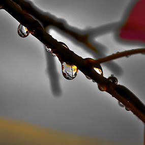 after rain by Deependra Bapna - Nature Up Close Leaves & Grasses ( color, drop, leaves )