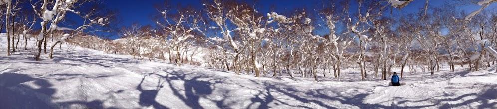 Photo: Fresh snow and trees!