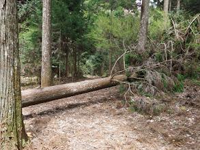切り倒された木