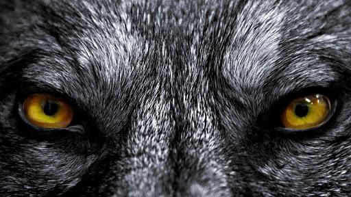 Wolf Eyes Live Wallpaper screenshot 1